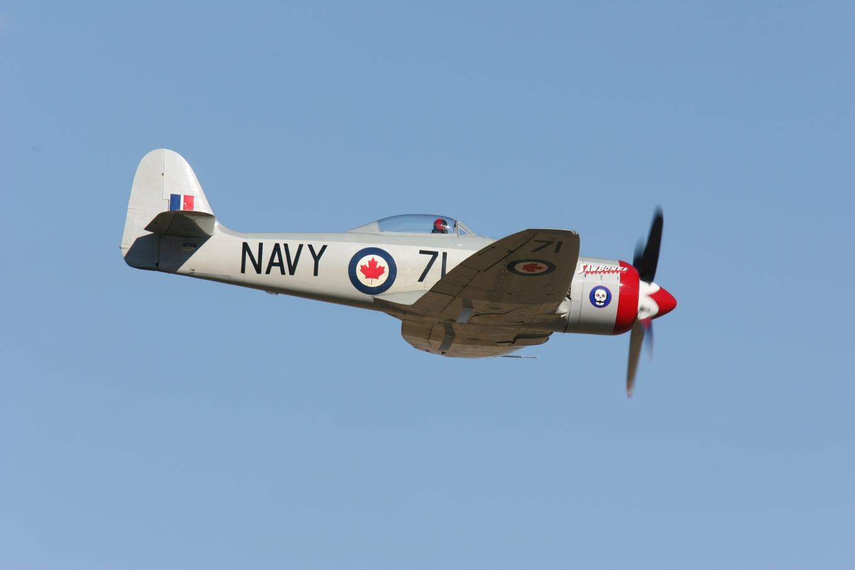 Race 71 Sawbones, Hawker Sea Fury