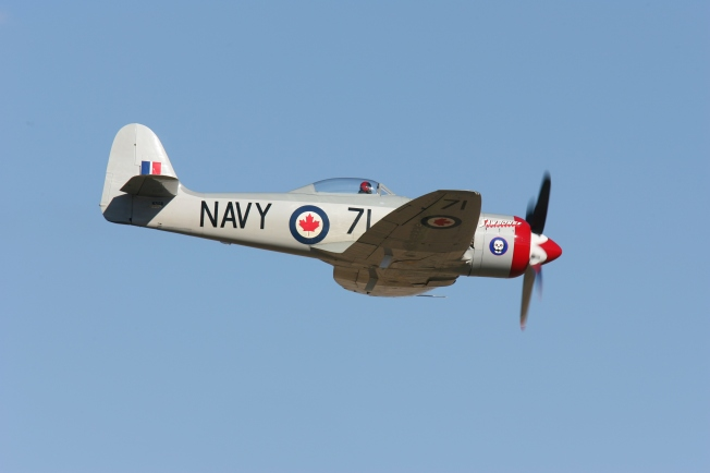 Race 71 Sawbones, Hawker Sea Fury