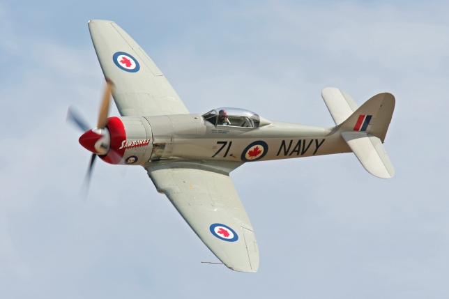 Race 71 Sawbones, Hawker Sea Fury, Dan Vance, Pilot
